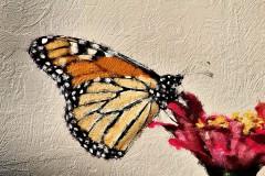 Vlinder_1
